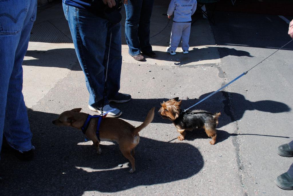 Apache Leap Chichua dogs race 002