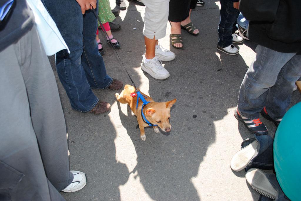 Apache Leap Chichua dogs race 007