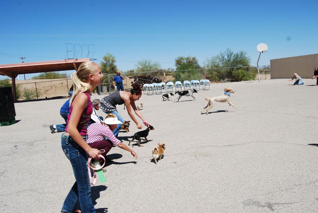 2013 Elks Dog Show_067