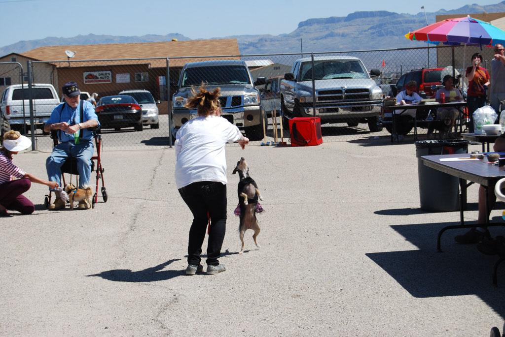 2013 Elks Dog Show_071