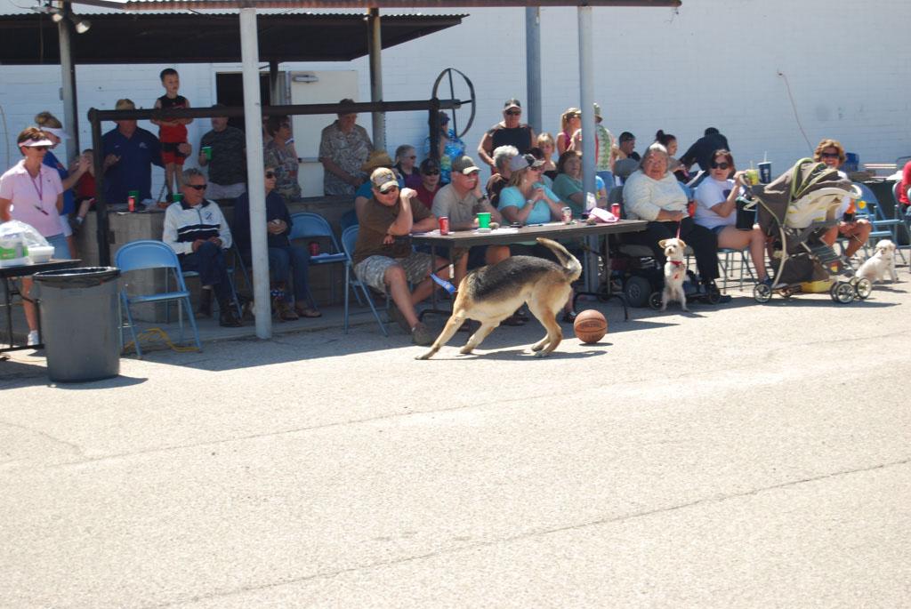2013 Elks Dog Show_110