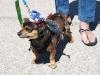 2013 Elks Dog Show_106