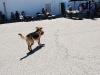 2013 Elks Dog Show_109