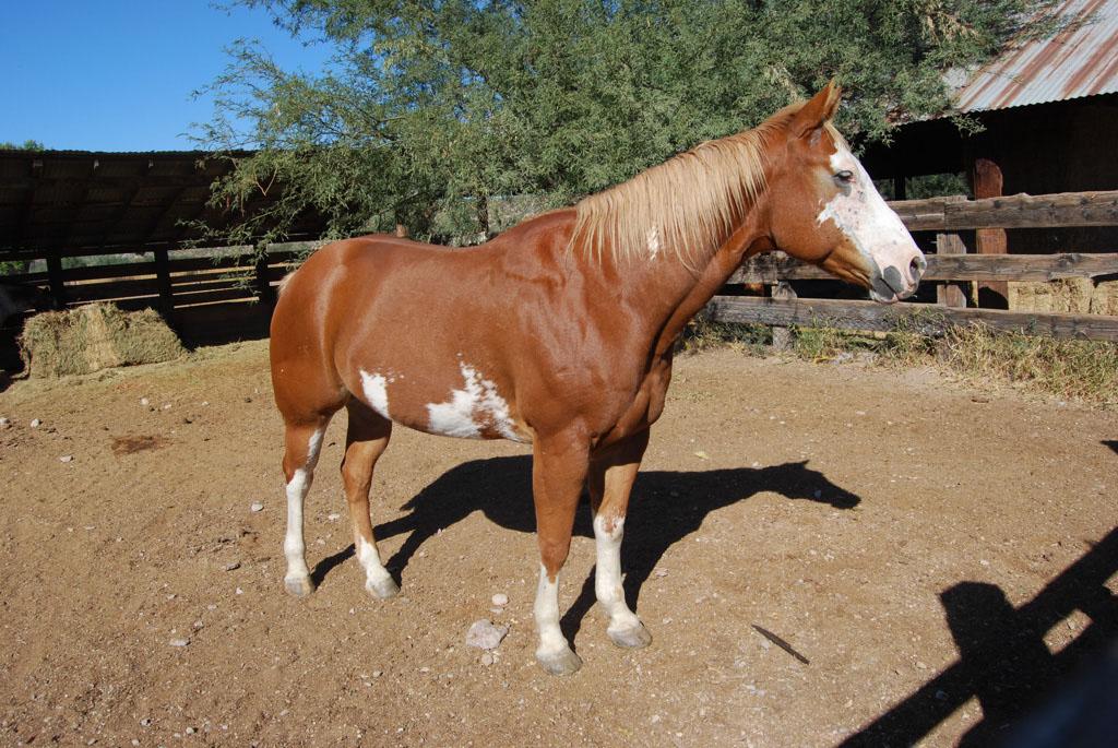 Carlink Ranch_021