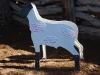 Carlink Ranch_019