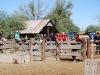 Carlink Ranch_028