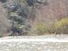 Gila Kayaking 2013_004