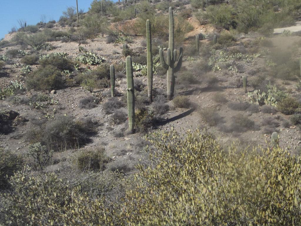 LOST Trail_014