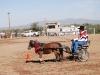 Southern Arizona Horse Expo_003