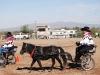 Southern Arizona Horse Expo_004