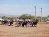 Southern Arizona Horse Expo_006