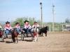 Southern Arizona Horse Expo_018
