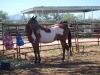 Southern Arizona Horse Expo_061