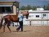 Southern Arizona Horse Expo_112