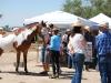 Southern Arizona Horse Expo_118