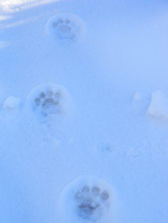Cat Tracks.