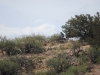 BIKE,_ATV_RACES_3C_RANCH201420140525_0002