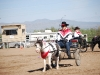 Southern Arizona Horse Expo_009