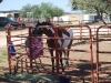 Southern Arizona Horse Expo_059