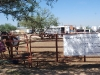 Southern Arizona Horse Expo_060