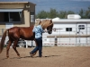 Southern Arizona Horse Expo_112