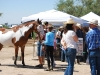 Southern Arizona Horse Expo_118