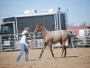 Southern Arizona Horse Expo_173